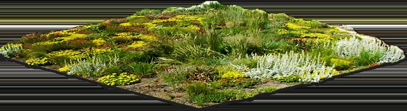 Floramyco Floradak Groendaken